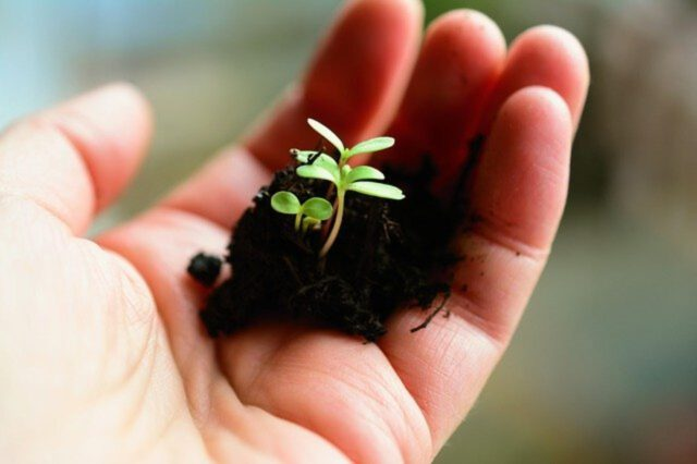 Jak powiększyć mały ogród?