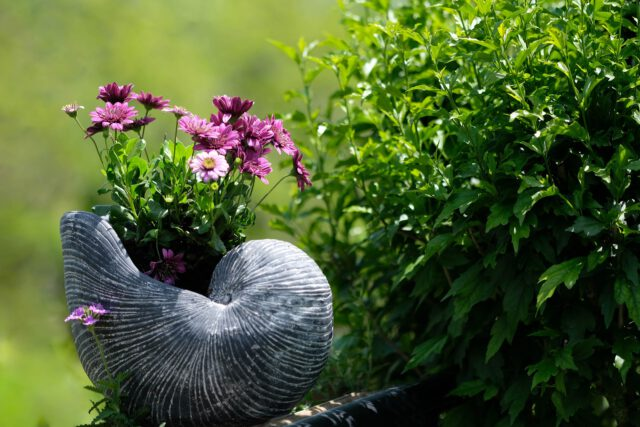 Ocet – cudowny środek do ogrodu
