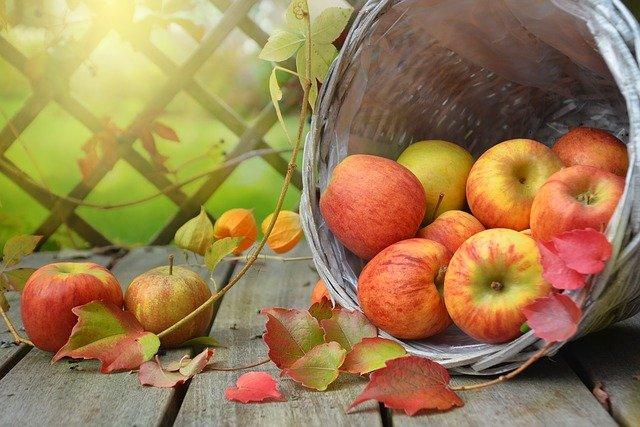 Pyszne jabłka na koniec września-jabłoń Szampion