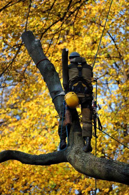 usuwanie drzewa